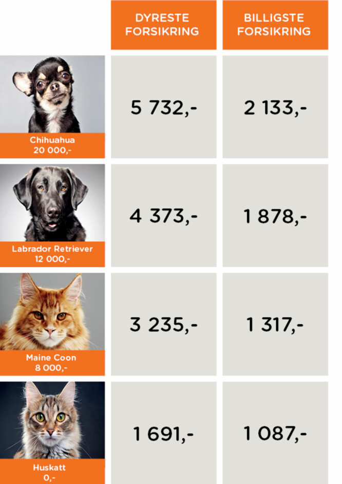 <strong>BILLIGSTE OG DYRESTE FORSIKRING:</strong> Norsk familieøkonomi har sjekket prisene på dyreforsikringer. Det er store forskjeller på pris - men også på vilkår og innhold. Foto: Norsk familieøkonomi