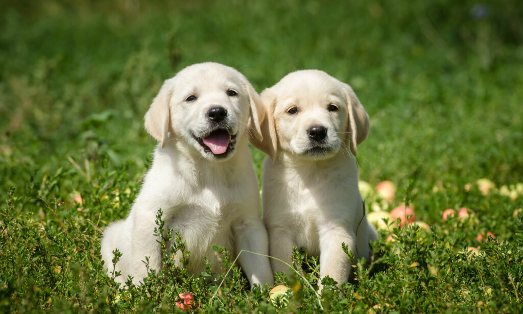 HELSEGEVINST: Hund er bra for helsa, har svenske forskere funnet ut. Foto: NTB Scanpix