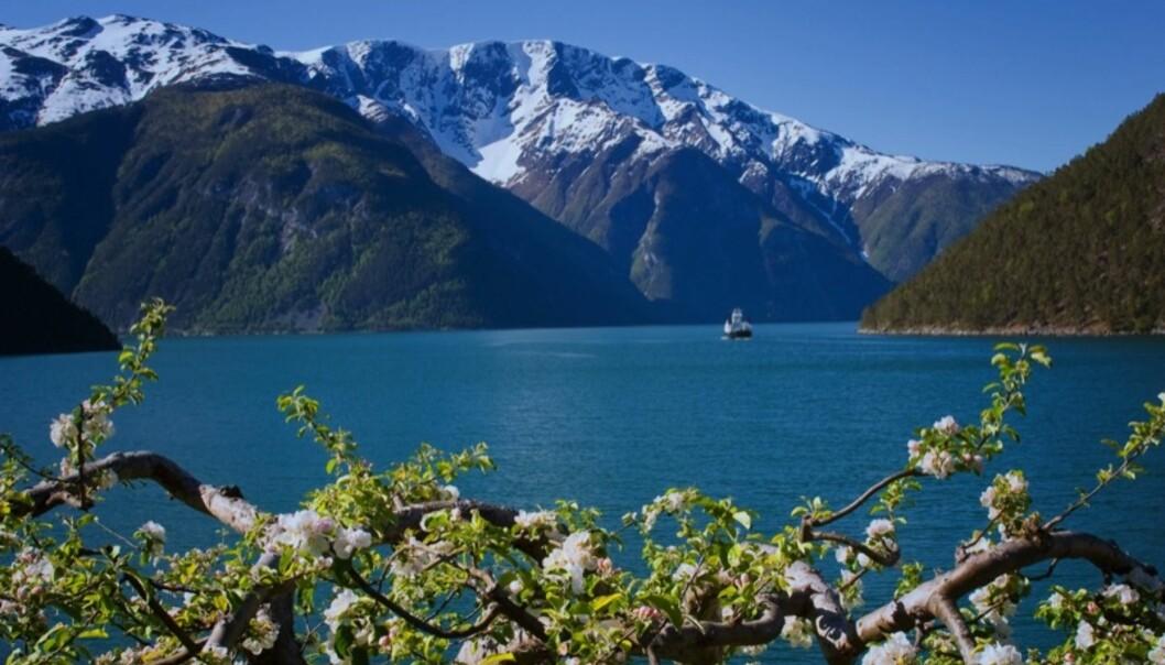 DYRERE IDYLL: Vestlandske fjorder er et yndet reisemål for mange utenlandske turister på Norges-ferie. Nå blir slik opplevelser dyrere, og merkostnaden må i mange tilfeller turarrangørene ta på egen kappe. Foto: Finn Loftesnes