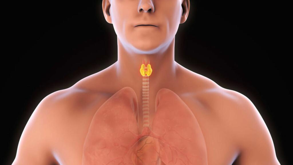 HYPOTYREOSE: Nedsatt funksjon i skjoldbruskkjertelen forårsaker sykdommen Foto: NTB Scanpix/Shutterstock