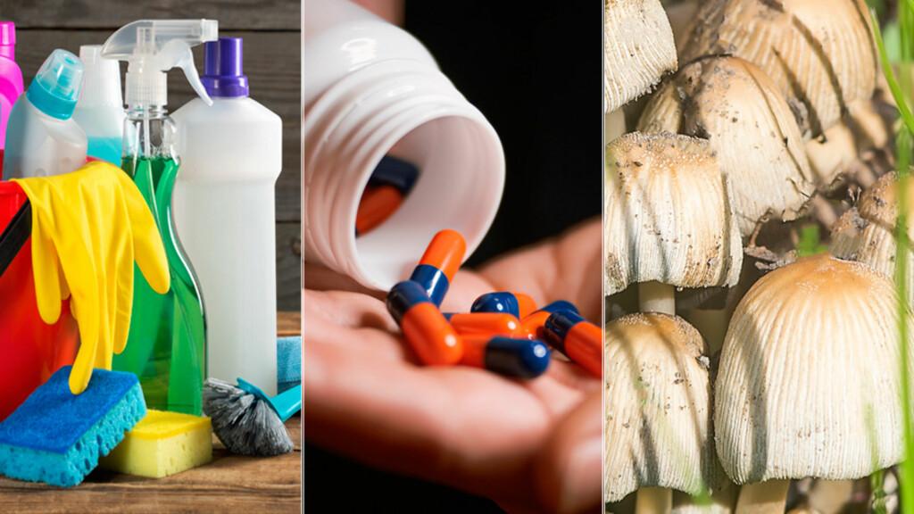 FORGIFTNING: Både stoffer fra naturen som giftig sopp, vaskemidler og legemidler kan gi alvorlig forgiftning ved inntak. Foto: NTB Scanpix/Shutterstock