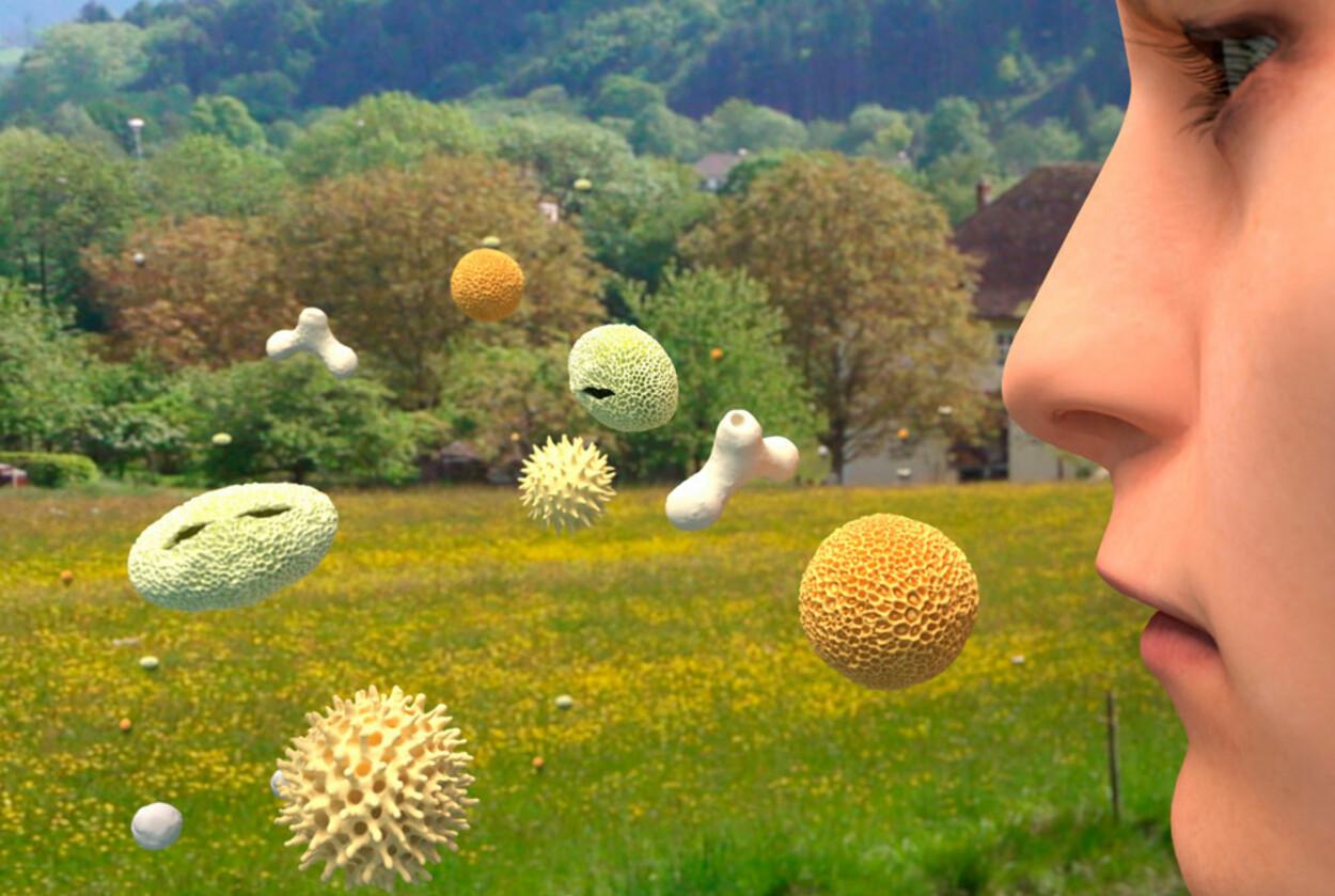 ALLERGIPLAGER: Pollen i lufta skaper plager for dem som er allergiske. Rennende eller tett nese, nysing, kløende og røde øyne er vanlige symptomer. Foto: NTB Scanpix / Science Photo Library