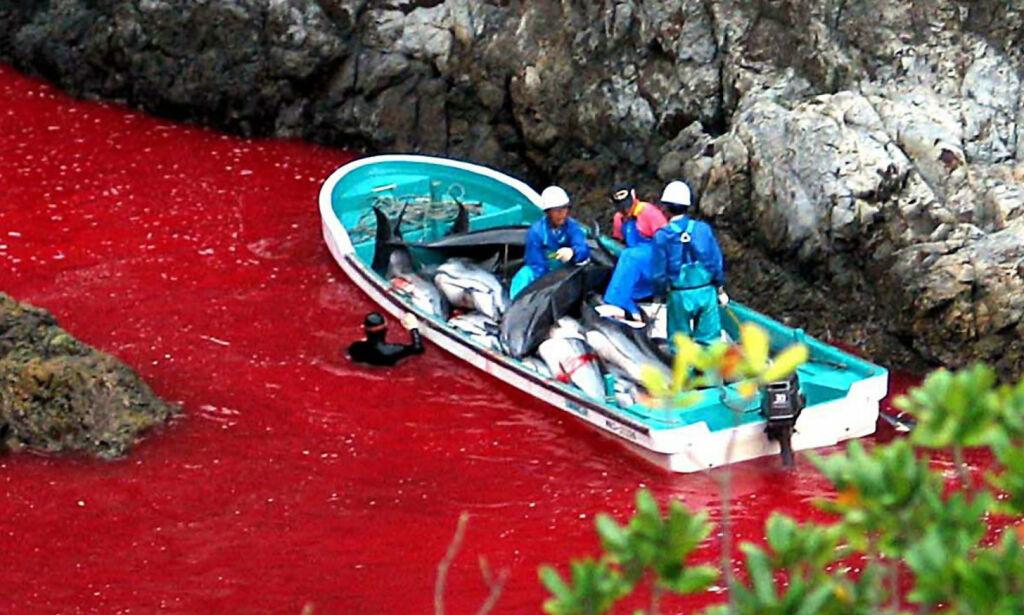 image: Ble lagt for hat over hele verden etter bildene av det blodrøde havet