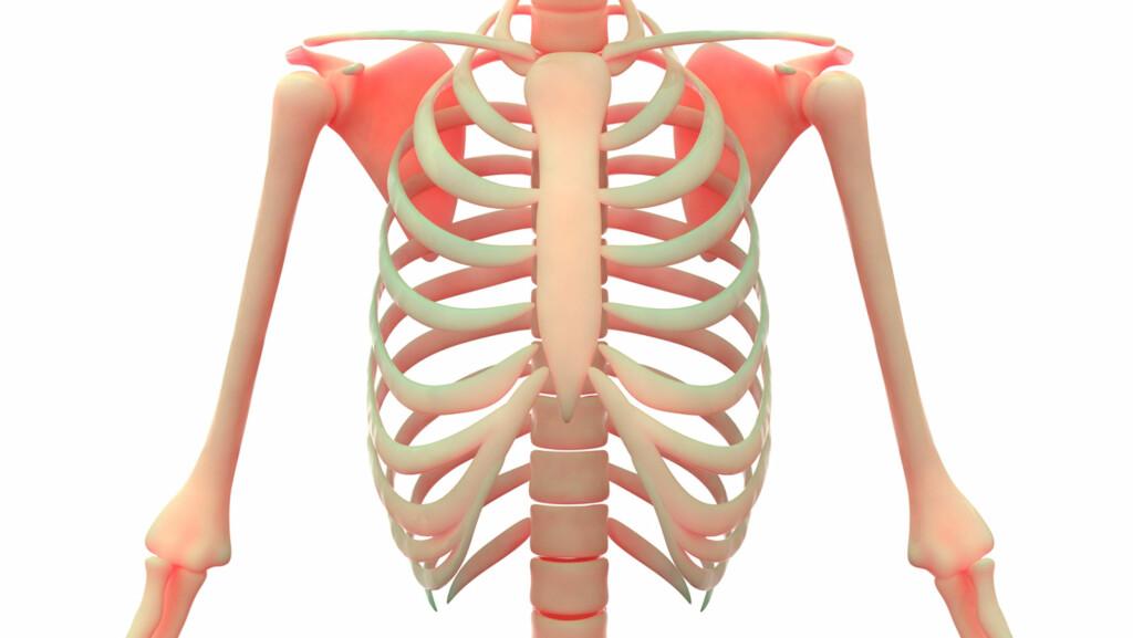 SMERTER I BRYSTVEGGEN: Smerter fra brystbeinet og ribbeina kan ha flere årsaker.  Foto: NTB Scanpix/Shutterstock