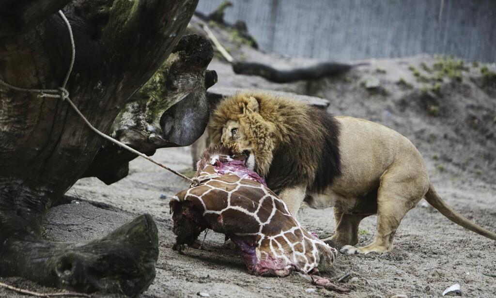 DYREFÔR: To dyrehager i København tar imot kjæledyr som de senere avliver og bruker som dyrefôr. Foto: Kasper Palsnov / NTB scanpix