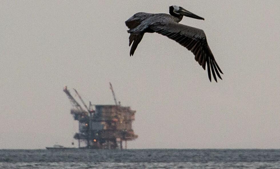 ÅPNER: Trump-regjeringen i USA vil åpne store områder i Atlanterhavet, Stillehavet og Arktis for oljeleting, ifølge amerikanske regjeringskilder.  Foto: Robyn Beck / AFP / NTB Scanpix