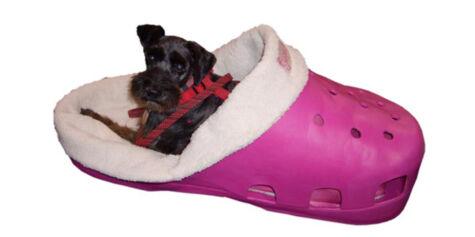 image: Hunde Crocs