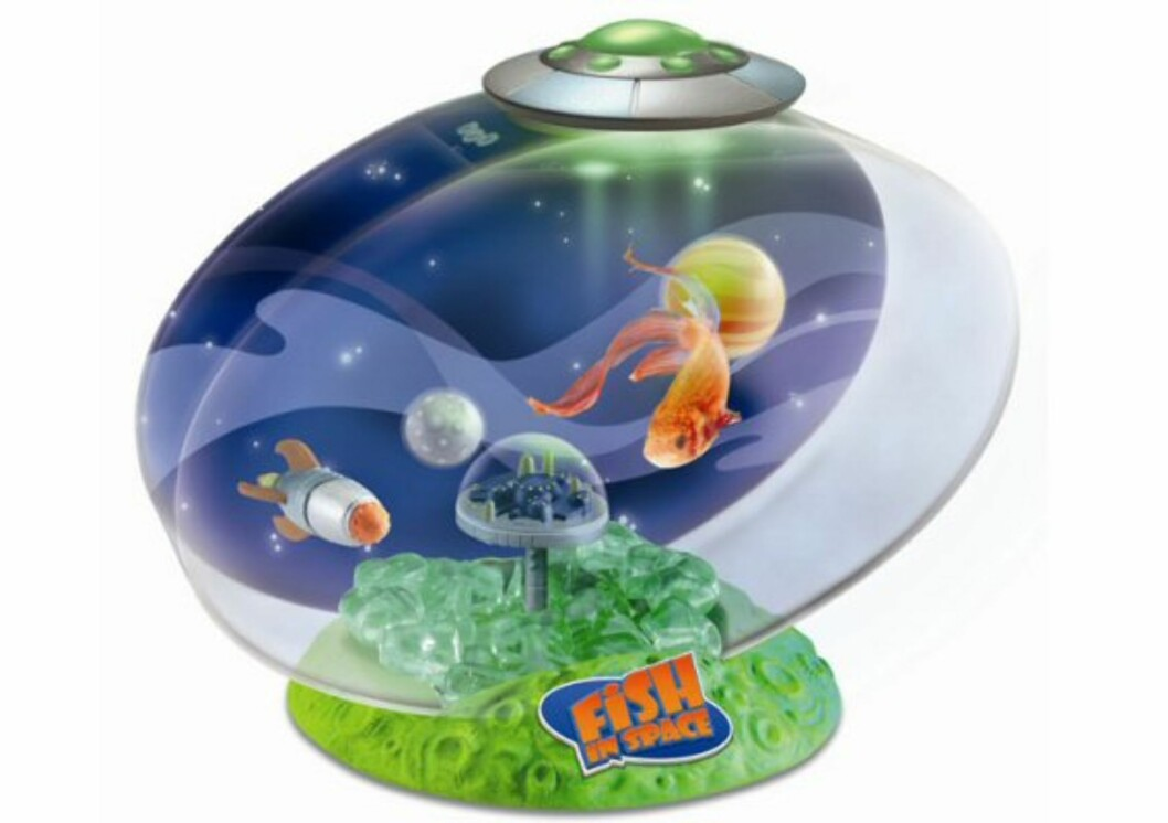 Fish In Space er en gullfiskbolle