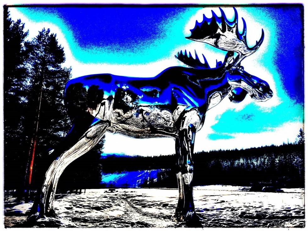 BYGDEDYRET: To krimbøker med sprø og fine lokale rammefortellinger er nå ute, den ene fra Østerdalen der denne elgen er sjefen og den andre fra farge og skumle Valdres. Foto med filters: Tom Stalsberg