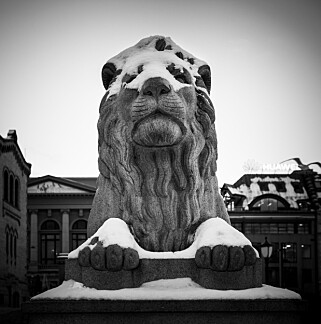 HJELP: Det snør på løven. Foto: Lars Eivind Bones / Dagbladet