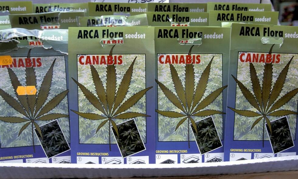 CANNABIS-FRØ: I et regulert marked vil det bli mye enklere for helsemyndigheter å samle, forske på og iverksette tiltak overfor individer og miljøer som bruker og/eller har problemer med rusmidler, skriver artikkelforfatterne. Her fra lovlig salg av frø for dyrking av cannabisplanter på blomstertorget i Amsterdam.  Foto: Steinar Myhr / NN / Samfoto / NTB Scanpix