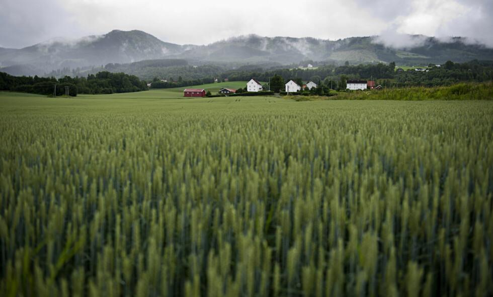 VET FOR LITE: - Kunnskapsmangelen om importvernet er overraskende, mener artikkelforfatterne. Foto: Benjamin A. Ward / Dagbladet