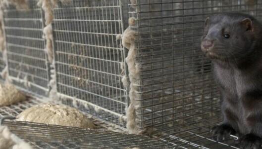 Distriktene trenger ikke pelsdyrnæringa