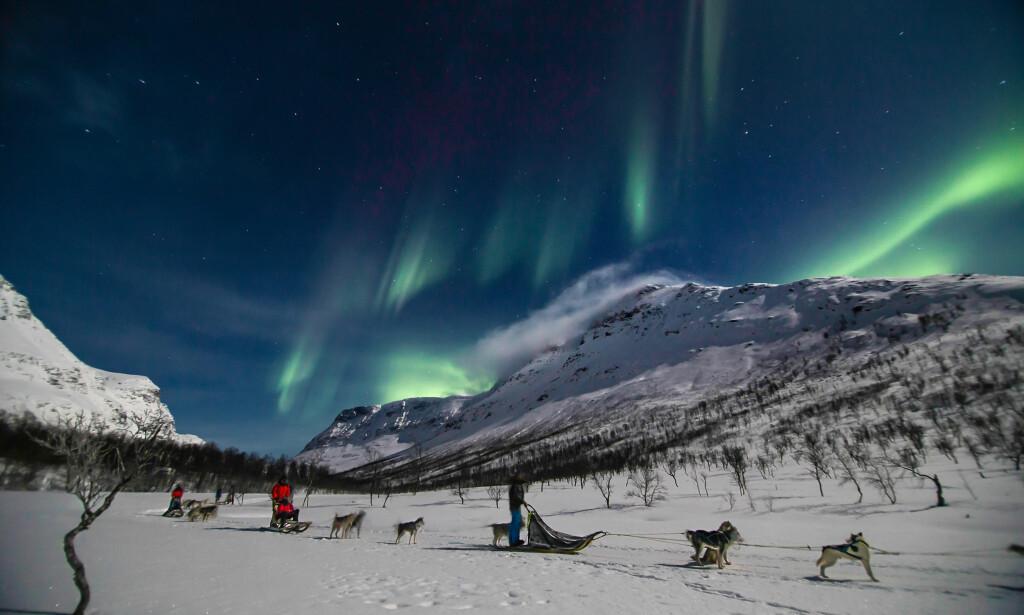 NATUROPPLEVELSER: Rekordmange turister kommer til Nord-Norge også denne vinteren. Primørt for å se nordlyset, men mange kombinerer det med for eksempel hundekjøring og hvalsafari. Disse turistene fikk i både pose og sekk. Foto: Lloyd Rehnlund