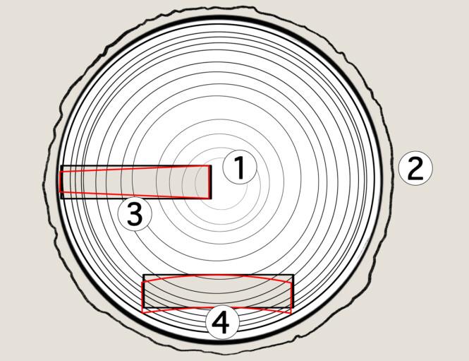 <strong>ÅRRINGER:</strong> Den lille prikken du ser i midten av treet kalles marg(1) og sirkelen rett innenfor barken kalles yte. Det øverste bordet (3) er skåret slik at det får stående årringer. Når det krymper kan ytesiden krympe litt mer enn margsiden. Det nederste bordet (4) er skåret slik at det får liggende årringer. Det vil kuve seg når det tørker slik at sidene trekkes mot ytesiden. Illustrasjon: Øivind Lie-Jacobsen