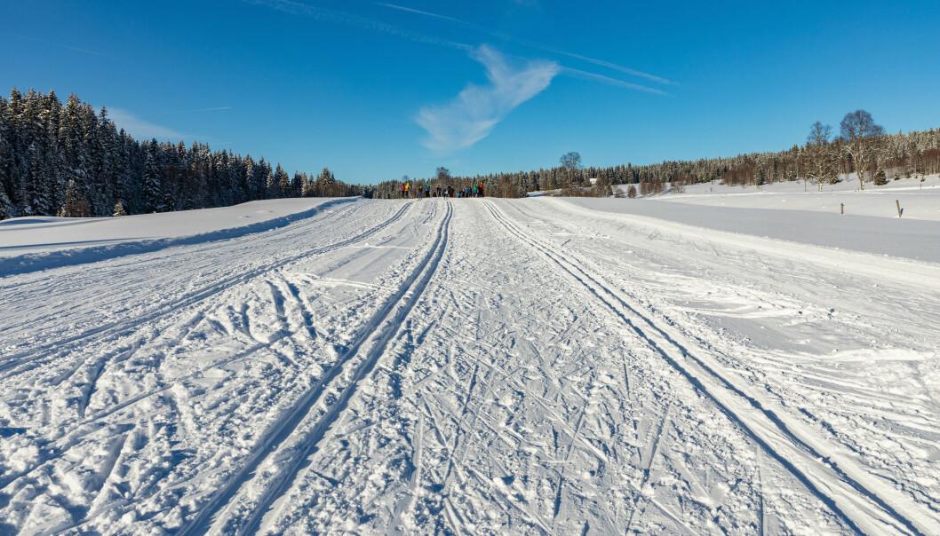<strong>GREIT I KALDVÆR:</strong> Er det fast snø vil du ikke ødelegge prepareringen - men er snøen løs så vil fotsporene dine lage store hull som ødelegger løypene - selv om du holder deg unna de klassiske skisporene. Foto: Shutterstock/NTB Scanpix
