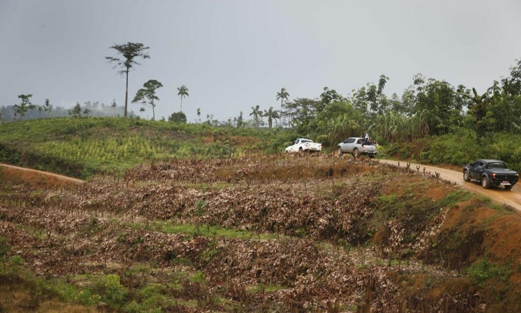 RASERT SKOG: En mulig seksdobling av etterspørselen etter palmeolje vil føre til katastrofal ødeleggelse av regnskog, som her i Indonesia. Foto: Heiko Junge / NTB scanpix