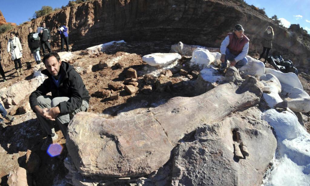 GIGANTISK: Paleontologene Jose Luis Carballido (t.v.) og Ruben Cuneo ved siden av knoklene fra kjempedinosauren som er funnet i Argentina. Foto: Reuters/NTB scanpix