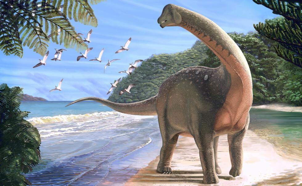 KJEMPEFUNN: Dette er en tegning av det forskerne mener de fant spor av i Egypt. Titanosauren skal ha vært stor som en skolebuss, og tung som en elefant. Foto: NTB Scanpix