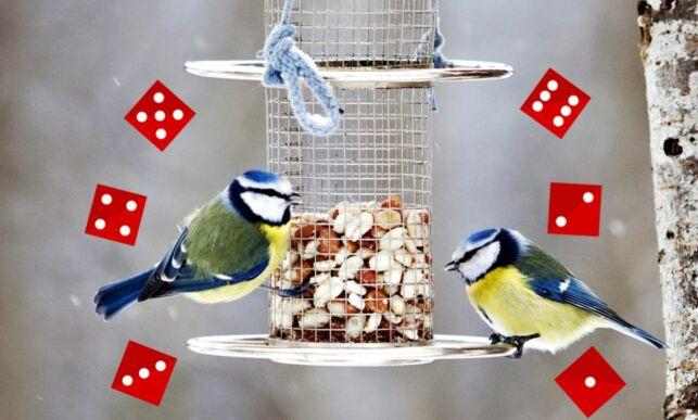 image: Antrekkene på fuglebrettet