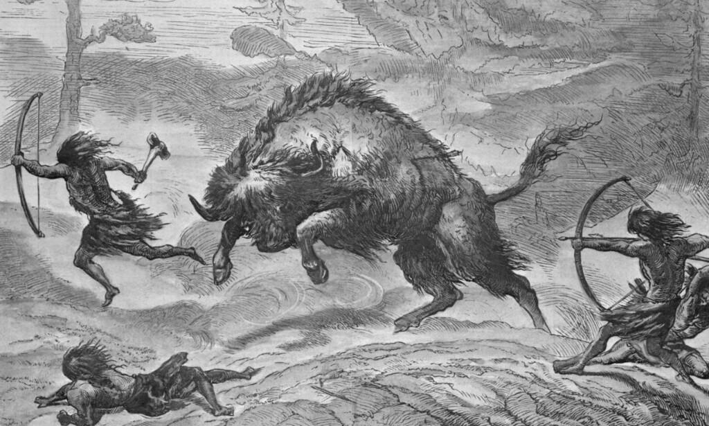 Uroksen: Naziobiologene drømte om å gjenskape verdenen til sine germanske forfedre. Illustrasjon: Bettmann Archive