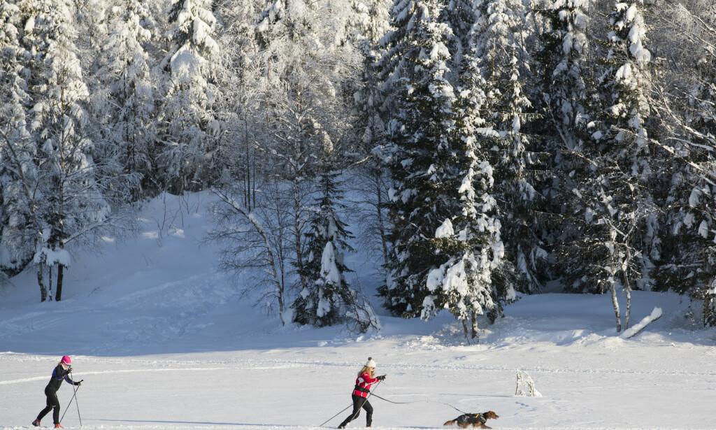 SKI: Til tross for mildvær, vil ikke skiføret i marka forsvinne. Foto: Håkon Mosvold Larsen / NTB scanpix