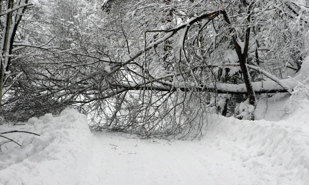 STORT SNØFALL: Det store snøfallet på Sørlandet har sørget for strømbrudd for enkelte husstander. Her ved Ålo i Søgne kommune. Foto: Tor Erik Schrøder / SCANPIX