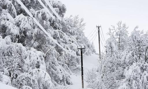 SNØ: To meter snø og vindstille i Holbygda fører til stort press på strømlinjer og trær. Foto: Marit Hommedal / NTB scanpix