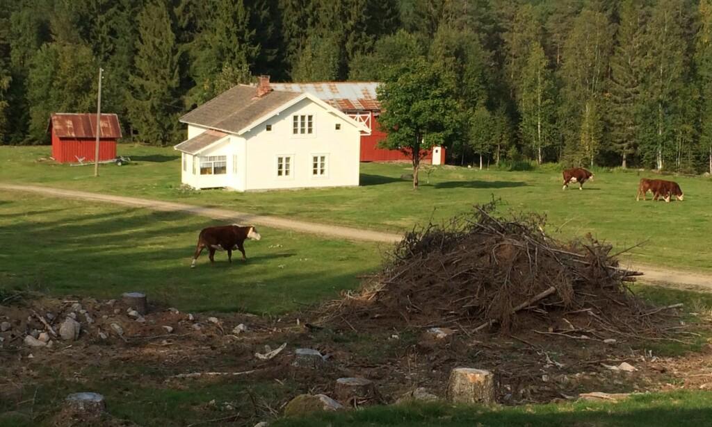 FLOTT NATUR: Produksjonsseskapet Strix skal ha funnet Gjedtjernet gård like før jul, og det ble dermed bestemt at sesong 14 av «Farmen» skal bli spilt inn der. Foto: TV 2