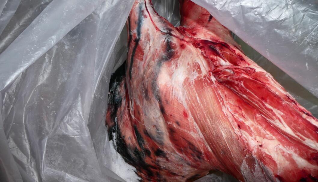 <strong>RÅTTENT:</strong> Mattilsynets veterinærer fastslo at lammeskrotten fra en kjøttforretning i Oslo var delvis råtten.