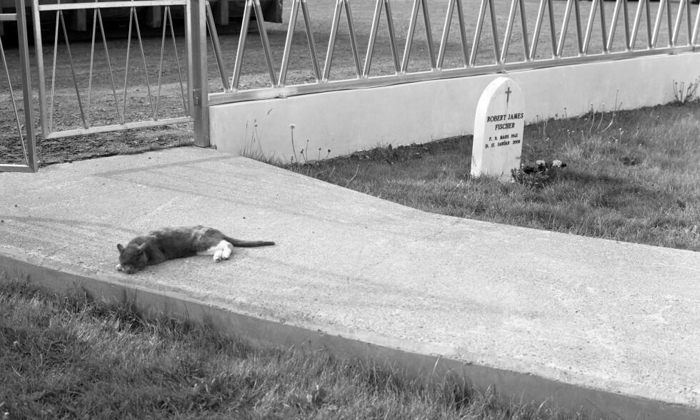 SJAKK-KATT: Dag Alvengs nyeste serie inneholder gravene til store sjakkspillere. Her selveste sjakkmesteren Bobby Fischers grav, og en katt som vakt. <br>FOTO: DAG ALVENG