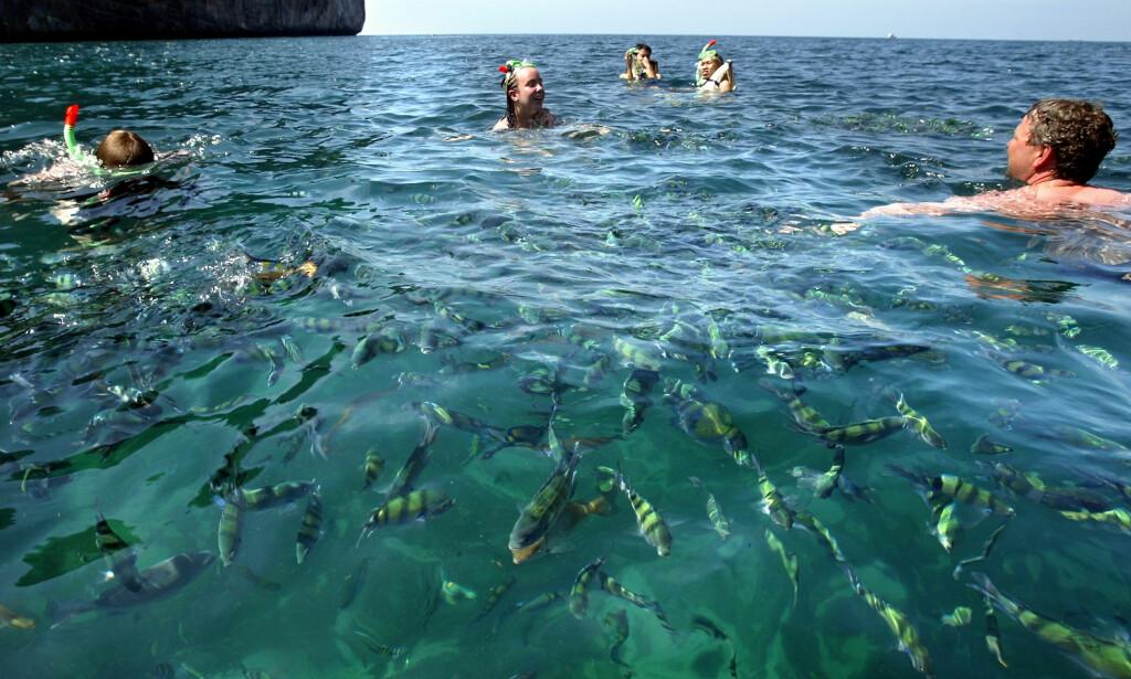 OVERBEFOLKET: Opptil 5000 turister kommer til Maya Beach hver dag. Det er mer enn livet i havet kan absorbere. Foto: NTB Scanpix
