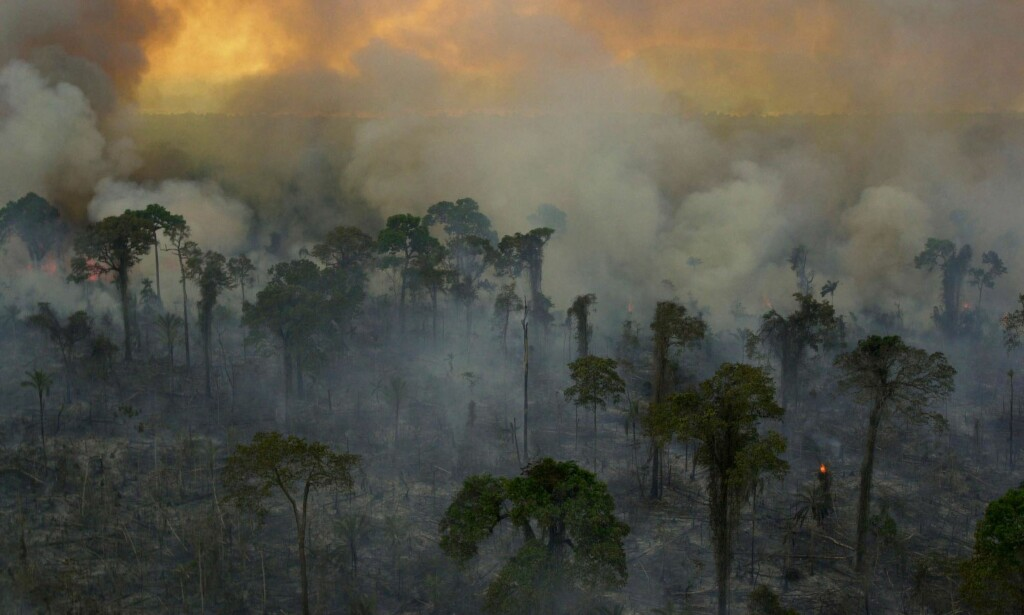 TAPER TERRENG: Skogbranner på grunn av tørke og varmere klima raserer nå mer av Amazonas enn det regnskogbevaringen klarer å gjøre opp for. Foto: AP