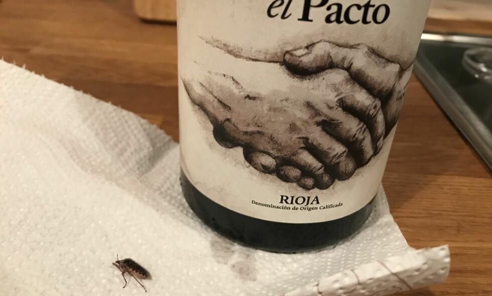 INSEKT: En koselig mandagskveld snudde brått da ekteparet fra Trondheim fant et insekt i vinflaska si. Foto: Privat