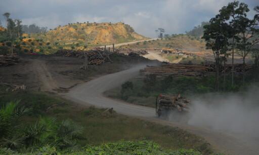 AVSKOGING: Palmeoljeplantasjene i Malaysia (bildet) og Indonesia utgjør en stor trussel mot regnskogen. Foto: Regnskogfondet