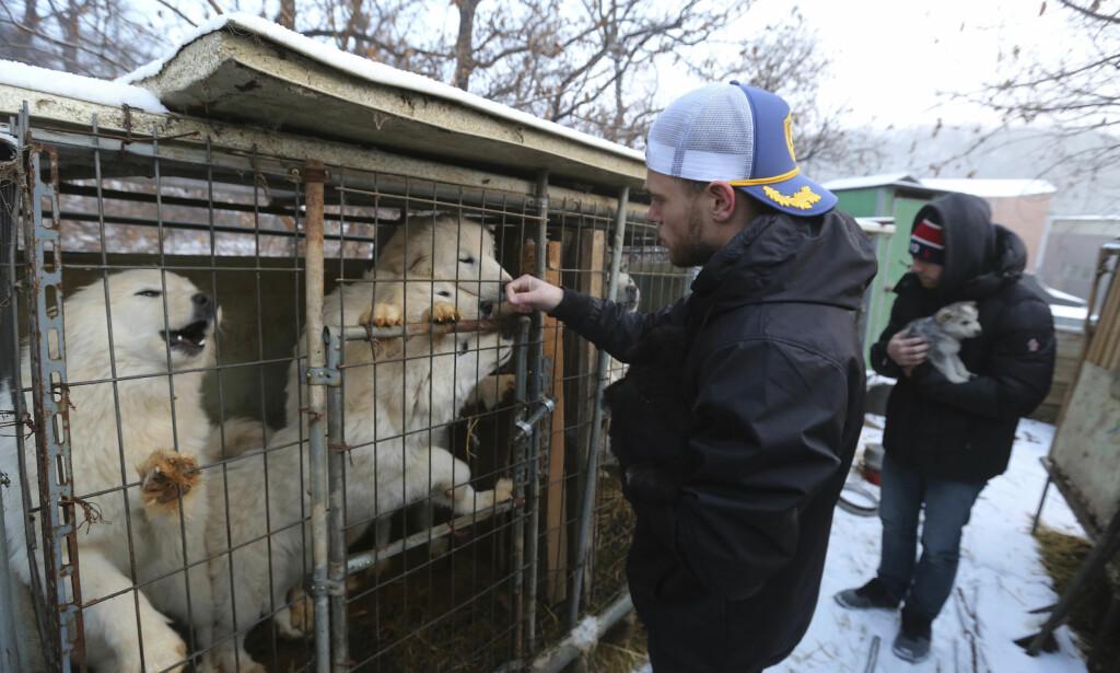 HJERTESKJÆRENDE: Slik beskriver Gus Kenworthy besøket på en koreansk hundefarm. Foto: AP Photo/Ahn Young-joon
