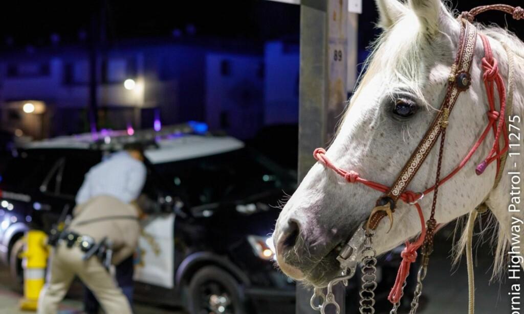 I TRYGGE HENDER: Hesten Guera ble fraktet hjem til matmor etter å ha vært på luftetur med en 29 [r gammel mann. Foto: Politiet i Sante Fe.