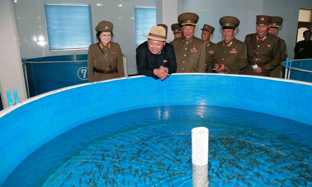 GLA´ LAKS: Nord-Koreas leder Kim Jong-un smilte fra øre til øre da han i mai 2015 besøkte oppdrettsanlegget Sokmak. Anlegget drives av den koreanske folkearmeens avdeling 810 og driver oppdrett på atlanterhavslaks. Foto: NTB Scanpix / Reuters / KCNA