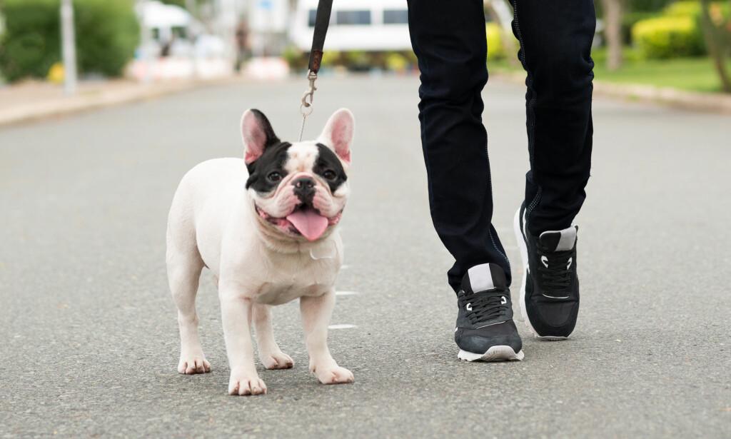 TILPASS AKTIVITETSNIVÅET: Hundens rase har mye å si for hvor mye mosjon de trenger. Foto: Shutterstock