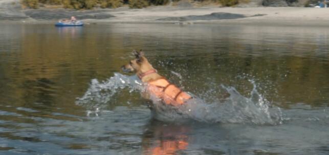 TIL SJØS: Husk at hunden må ha redningsvest i riktig størrelse når dere er ved vannet.