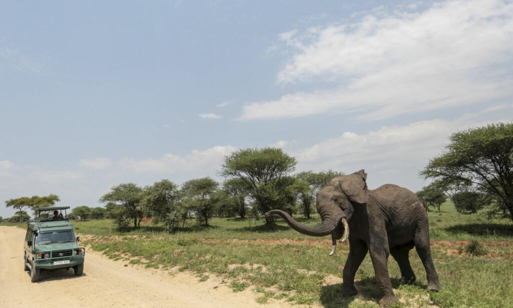 GRATIS FERIE: Kjendisene kommer blant annet til å motta en gratis ferie til Tanzania. Foto: NTB Scanpix