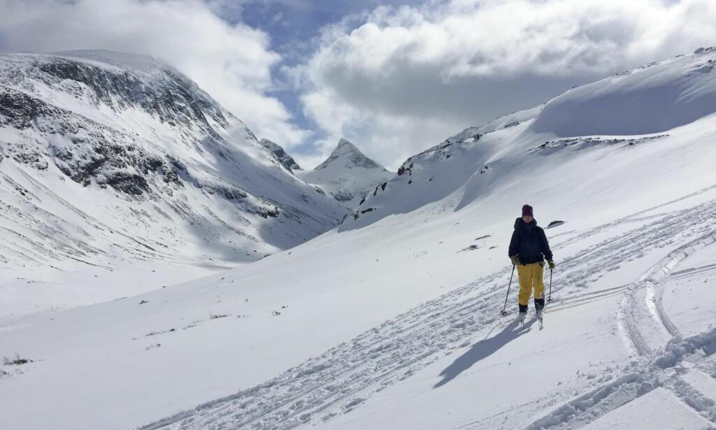 MEKTIG: I møte med den mektige naturen i den norske fjellheimen, så lunefull mot oss menneske, er det knapt mogeleg å forstå at han skal være utsett – langt mindre truga. Foto: Kristian Lie / NTB scanpix