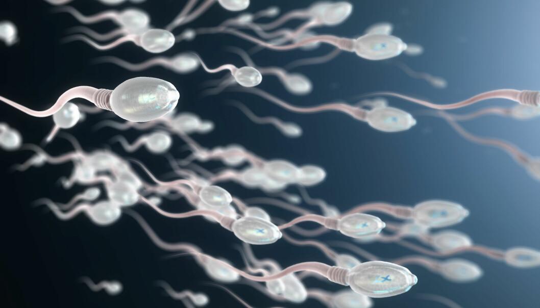 NEDGANG: Menn har færre levende sædceller i dag enn tidligere, viser studier. FOTO: NTB Scanpix