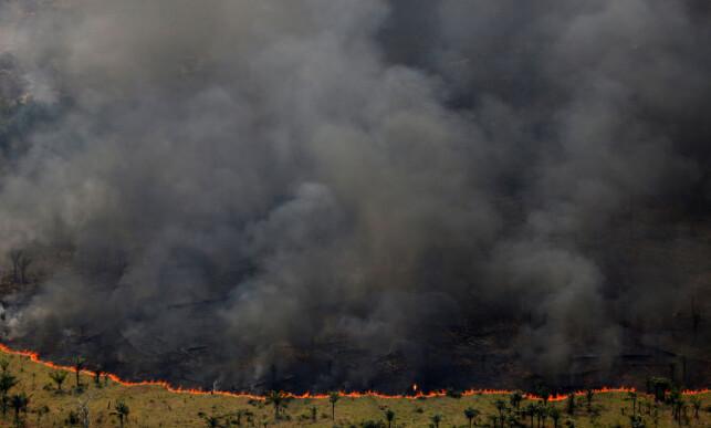TAMPEN BRENNER: Amazonas er blant områdene som trekkes fram som mest utsatt dersom man ikke klarer å bremse den globale oppvarminga. Bildet viser en kontrollert skogsbrann under «operasjon grønn bølg», der Brasils miljødepartement brenner ned skog i kampen mot ulovlig hogst. Foto: Bruno Kelly / Reuters / NTB Scanpix