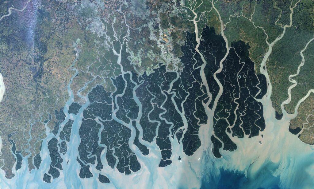 image: Forskere frykter katastrofal massedød i regnskogen: – Det er faen så skummelt