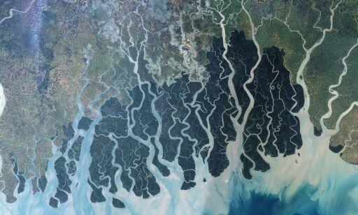 image: Forskere frykter katastrofal massedød i regnskogen: -Det er faen så skummelt