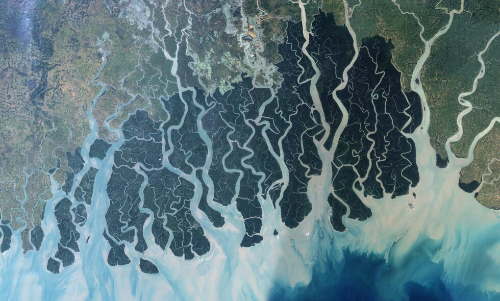 ØKER: Havøkning som følge av global oppvarming vil kunne ødelegge opp mot 95 prosent av yngleområdene til tigrene som lever i Sundarban. Satellittfoto: Nasa