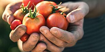 image: - Jeg tenker på tomater fra tidlig morgen til sent på kveld
