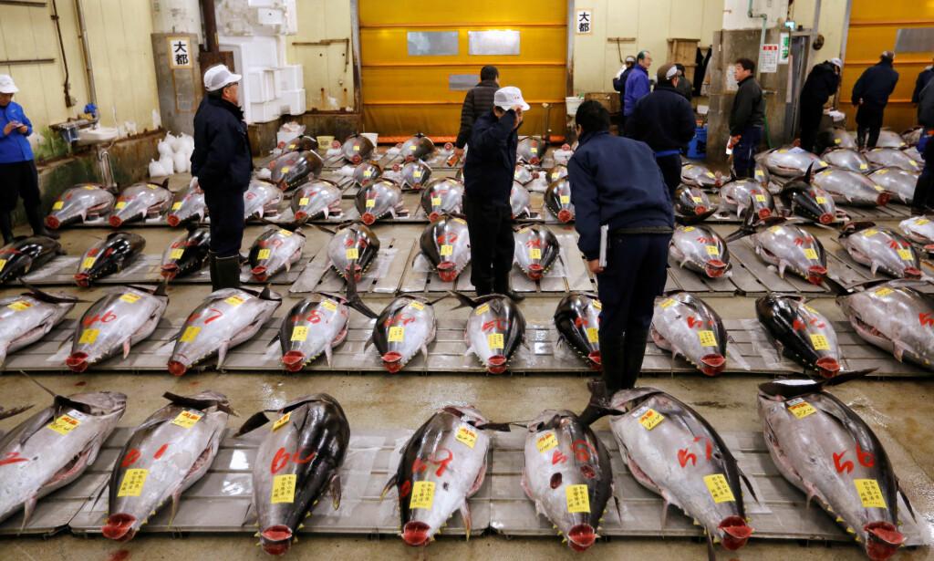 VIKTIG RESSURS: Tunfisk er for mange land i Stillehavsområde en svært viktig ressurs. Her blir de solgt på marked i Tokyo i Japan. Ifølge en FN-rapport vil det bli tomt for fiskearter man i dag bruker til eksport. Foto: NTB scanpix