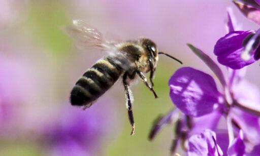 image: Verdens insekter, planter, dyr og mennesker går en dyster framtid i møte